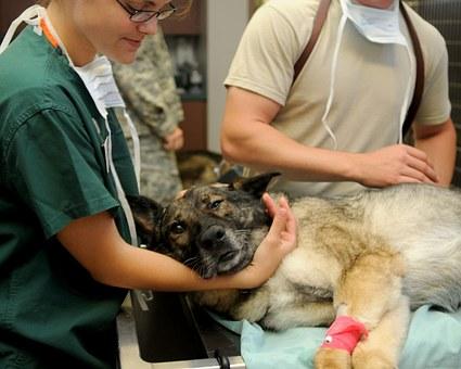 rehabilitacja zwierząt wrocław