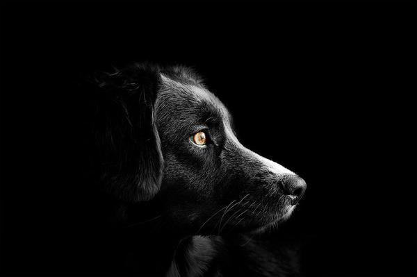 barf dla psa