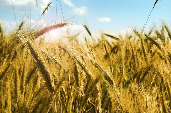 maszyny do czyszczenia ziarna zbóż